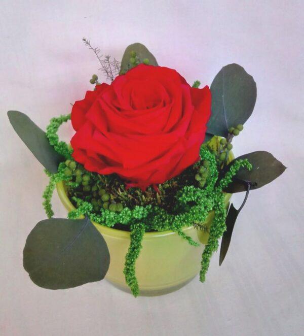 punane_roos-klaasis